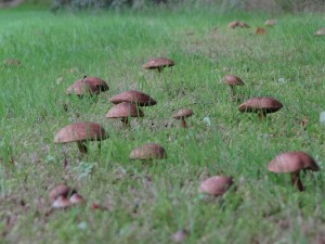 Low Level Mushrooms