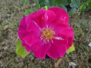 Rose Nur Mahal