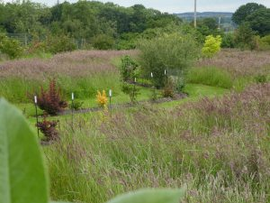 borders and grasses